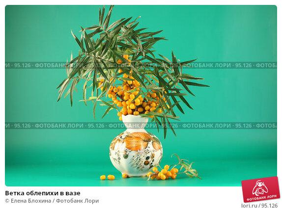Купить «Ветка облепихи в вазе», фото № 95126, снято 27 сентября 2007 г. (c) Елена Блохина / Фотобанк Лори