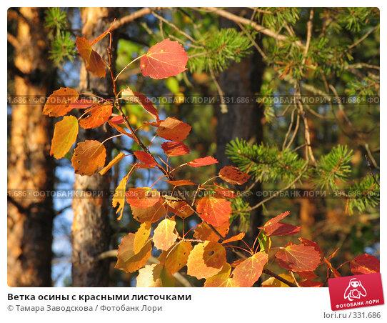 Ветка осины с красными листочками, эксклюзивное фото № 331686, снято 24 сентября 2006 г. (c) Тамара Заводскова / Фотобанк Лори