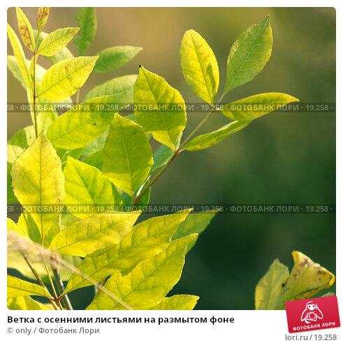 Ветка с осенними листьями на размытом фоне, фото № 19258, снято 28 февраля 2017 г. (c) only / Фотобанк Лори