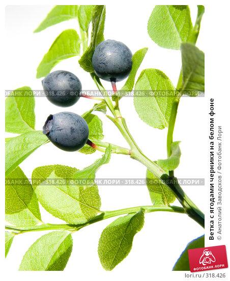 Ветка с ягодами черники на белом фоне, фото № 318426, снято 8 июля 2006 г. (c) Анатолий Заводсков / Фотобанк Лори