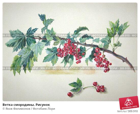 Ветка смородины. Рисунок, иллюстрация № 309910 (c) Яков Филимонов / Фотобанк Лори