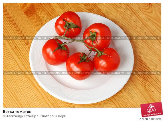 Ветка томатов, фото № 308094, снято 31 мая 2008 г. (c) Александр Катайцев / Фотобанк Лори