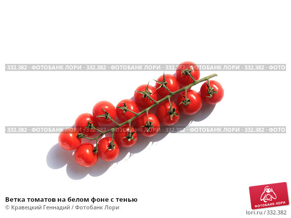 Ветка томатов на белом фоне с тенью, фото № 332382, снято 11 июня 2008 г. (c) Кравецкий Геннадий / Фотобанк Лори