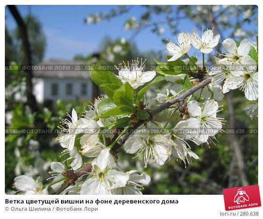 Купить «Ветка цветущей вишни на фоне деревенского дома», фото № 280638, снято 8 мая 2008 г. (c) Ольга Шилина / Фотобанк Лори