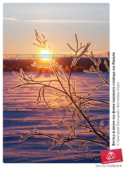 Купить «Ветка в инее на фоне низкого солнца на Ямале», фото № 6698814, снято 3 февраля 2013 г. (c) Григорий Писоцкий / Фотобанк Лори