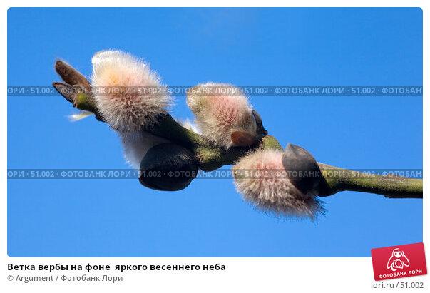 Ветка вербы на фоне  яркого весеннего неба, фото № 51002, снято 24 марта 2007 г. (c) Argument / Фотобанк Лори