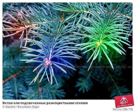 Ветки ели подсвеченные разноцветными огнями, фото № 256718, снято 29 июня 2017 г. (c) ElenArt / Фотобанк Лори