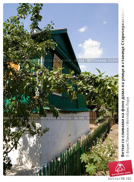 Ветки со сливами на фоне дома на улице в станице Старочеркасской, фото № 98182, снято 28 июля 2007 г. (c) Борис Панасюк / Фотобанк Лори