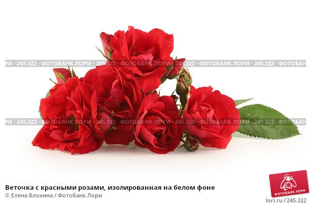 Веточка с красными розами, изолированная на белом фоне, фото № 245322, снято 28 июня 2007 г. (c) Елена Блохина / Фотобанк Лори