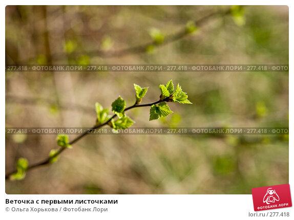 Веточка с первыми листочками, фото № 277418, снято 3 мая 2008 г. (c) Ольга Хорькова / Фотобанк Лори