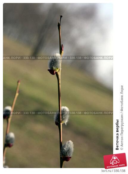 Веточка вербы, фото № 330138, снято 26 марта 2008 г. (c) Антон Перегрузкин / Фотобанк Лори