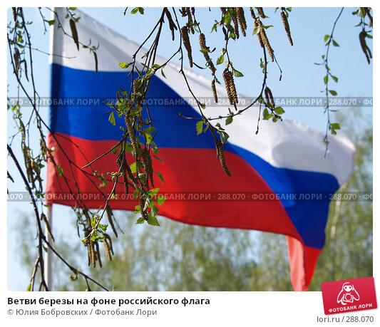 Ветви березы на фоне российского флага, фото № 288070, снято 9 мая 2008 г. (c) Юлия Бобровских / Фотобанк Лори