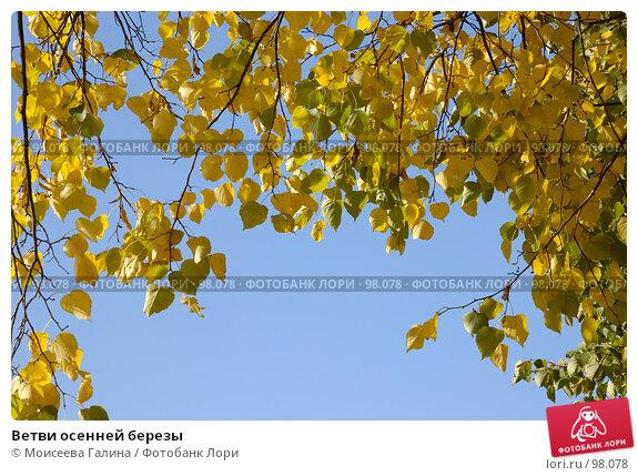 Купить «Ветви осенней березы», фото № 98078, снято 30 сентября 2007 г. (c) Моисеева Галина / Фотобанк Лори