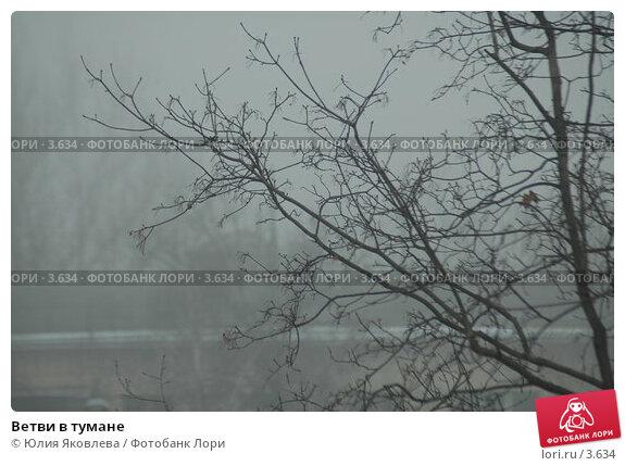 Ветви в тумане, фото № 3634, снято 10 апреля 2006 г. (c) Юлия Яковлева / Фотобанк Лори
