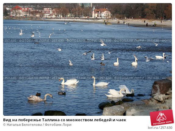 Купить «Вид на побережье Таллина со множеством лебедей и чаек», фото № 257630, снято 29 марта 2008 г. (c) Наталья Белотелова / Фотобанк Лори