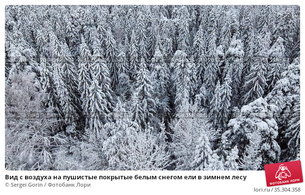 Вид с воздуха на пушистые покрытые белым снегом ели в зимнем лесу. Стоковое фото, фотограф Sergei Gorin / Фотобанк Лори