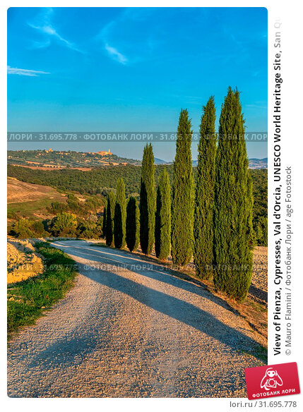 View of Pienza, Cypresses, Val d'Orcia, UNESCO World Heritage Site, San Quirico d'Orcia, Tuscany, Italy, Europe. Стоковое фото, фотограф Mauro Flamini / age Fotostock / Фотобанк Лори