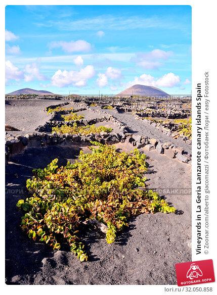 Vineyards in La Geria Lanzarote canary islands Spain. Стоковое фото, фотограф Zoonar.com/alberto giacomazzi / easy Fotostock / Фотобанк Лори