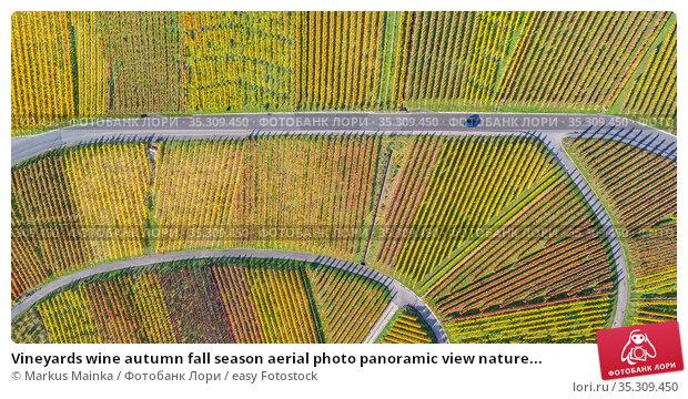 Vineyards wine autumn fall season aerial photo panoramic view nature... Стоковое фото, фотограф Markus Mainka / easy Fotostock / Фотобанк Лори