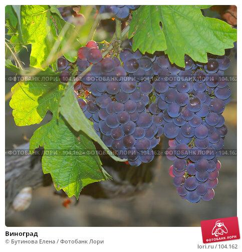 Купить «Виноград», фото № 104162, снято 22 марта 2018 г. (c) Бутинова Елена / Фотобанк Лори