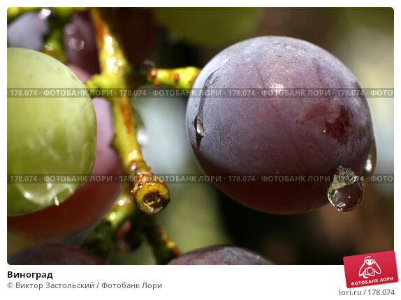 Виноград, фото № 178074, снято 14 сентября 2007 г. (c) Виктор Застольский / Фотобанк Лори
