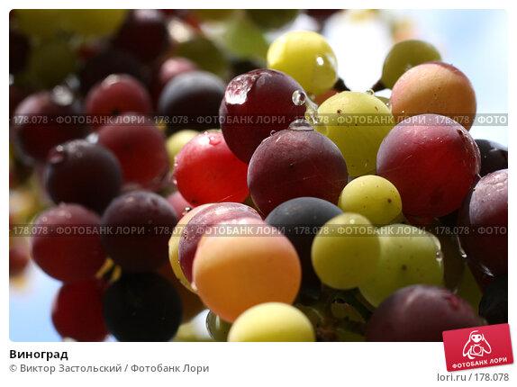 Виноград, фото № 178078, снято 14 сентября 2007 г. (c) Виктор Застольский / Фотобанк Лори