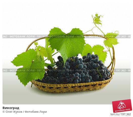 Виноград, фото № 197362, снято 4 сентября 2007 г. (c) Олег Жуков / Фотобанк Лори