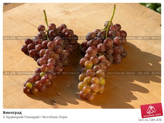 Купить «Виноград», фото № 281478, снято 19 сентября 2004 г. (c) Кравецкий Геннадий / Фотобанк Лори
