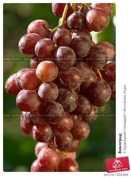 Виноград, фото № 334666, снято 19 сентября 2004 г. (c) Кравецкий Геннадий / Фотобанк Лори