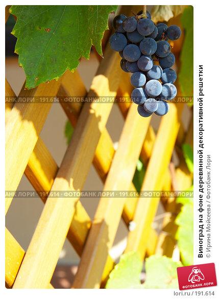 Виноград на фоне деревянной декоративной решетки, фото № 191614, снято 26 сентября 2007 г. (c) Ирина Мойсеева / Фотобанк Лори