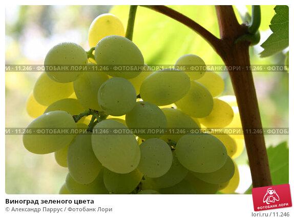 Виноград зеленого цвета , фото № 11246, снято 27 августа 2006 г. (c) Александр Паррус / Фотобанк Лори
