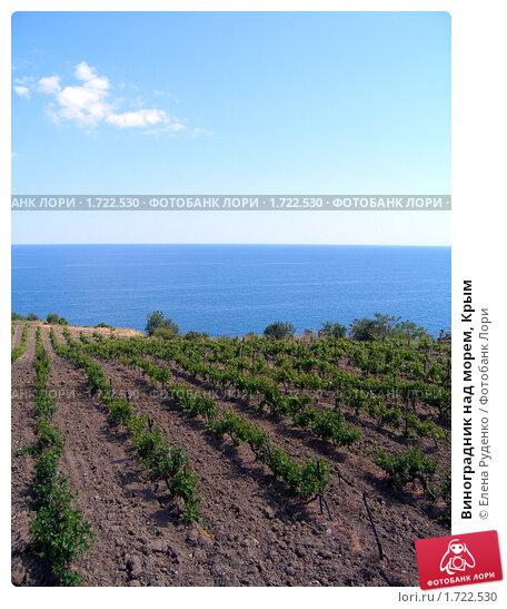 Купить «Виноградник над морем, Крым», фото № 1722530, снято 3 июня 2008 г. (c) Елена Руденко / Фотобанк Лори