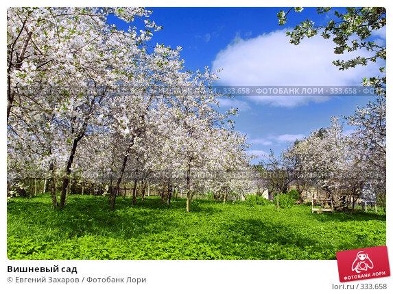 Вишневый сад, фото № 333658, снято 7 мая 2008 г. (c) Евгений Захаров / Фотобанк Лори