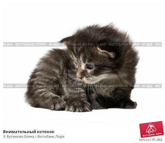 Внимательный котенок, фото № 41662, снято 22 апреля 2007 г. (c) Бутинова Елена / Фотобанк Лори