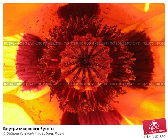 Внутри макового бутона, фото № 82370, снято 11 июня 2007 г. (c) Зайцев Алексей / Фотобанк Лори