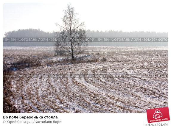 Во поле березонька стояла, фото № 194494, снято 8 января 2008 г. (c) Юрий Синицын / Фотобанк Лори