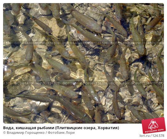 Купить «Вода, кишащая рыбами (Плитвицкие озера, Хорватия)», эксклюзивное фото № 124578, снято 29 июля 2005 г. (c) Владимир Горощенко / Фотобанк Лори