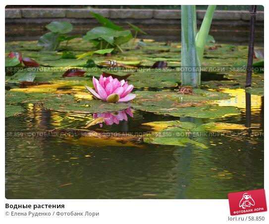 Купить «Водные растения», фото № 58850, снято 6 сентября 2006 г. (c) Елена Руденко / Фотобанк Лори