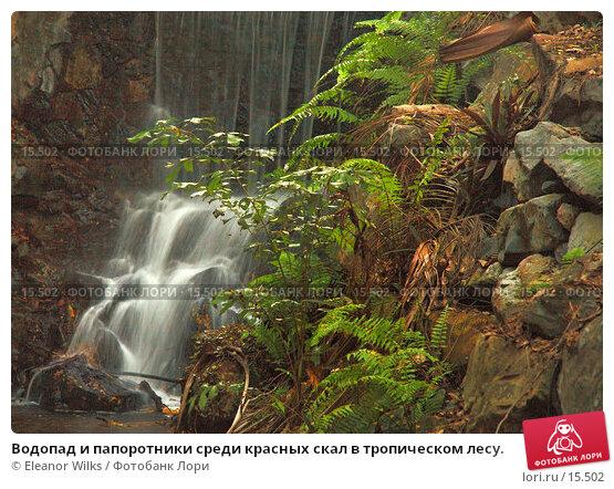 Купить «Водопад и папоротники среди красных скал в тропическом лесу.», фото № 15502, снято 8 декабря 2006 г. (c) Eleanor Wilks / Фотобанк Лори