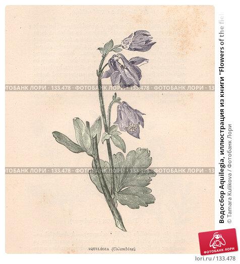 """Водосбор Aquilegia, иллюстрация из книги """"Flowers of the field"""", издано в Лондоне в 1888, ручная раскраска, иллюстрация № 133478 (c) Tamara Kulikova / Фотобанк Лори"""