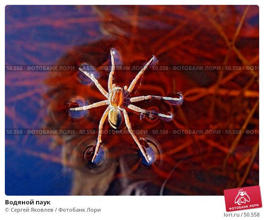 Купить «Водяной паук», фото № 50558, снято 1 апреля 2007 г. (c) Сергей Яковлев / Фотобанк Лори