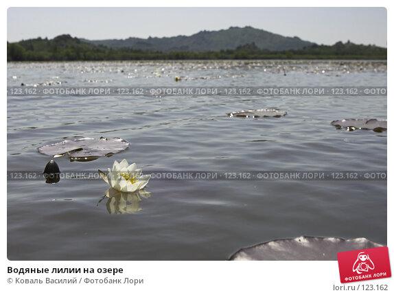 Водяные лилии на озере, фото № 123162, снято 24 января 2017 г. (c) Коваль Василий / Фотобанк Лори