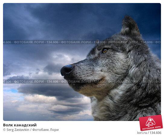 Волк канадский, фото № 134606, снято 12 мая 2004 г. (c) Serg Zastavkin / Фотобанк Лори