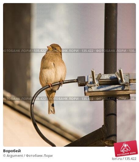 Воробей, фото № 135422, снято 30 ноября 2007 г. (c) Argument / Фотобанк Лори