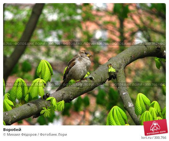 Воробей, фото № 300766, снято 7 мая 2008 г. (c) Михаил Фёдоров / Фотобанк Лори
