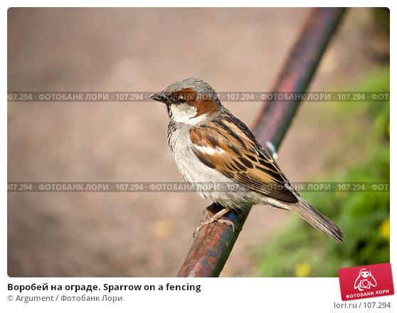 Воробей на ограде. Sparrow on a fencing, фото № 107294, снято 14 июня 2007 г. (c) Argument / Фотобанк Лори