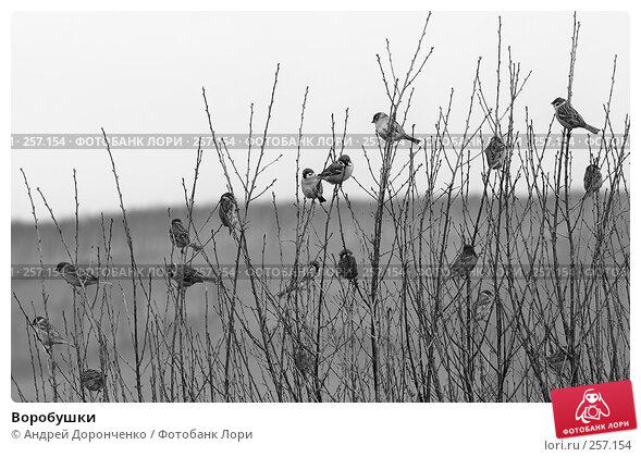 Воробушки, фото № 257154, снято 16 января 2017 г. (c) Андрей Доронченко / Фотобанк Лори