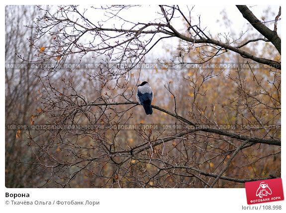 Ворона, фото № 108998, снято 26 октября 2007 г. (c) Ткачёва Ольга / Фотобанк Лори