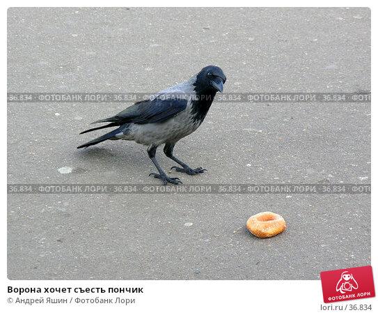 Ворона хочет съесть пончик, фото № 36834, снято 29 сентября 2005 г. (c) Андрей Яшин / Фотобанк Лори