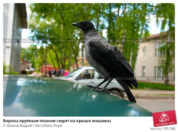Ворона крупным планом сидит на крыше машины, фото № 191766, снято 12 июня 2007 г. (c) Шахов Андрей / Фотобанк Лори